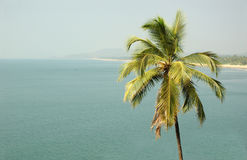Tropical landscape with palm Stock Photography