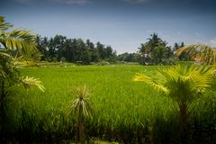Tropical landscape with palm Stock Photo