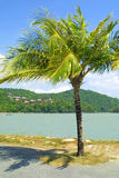 Tropical landscape with palm-tree Royalty Free Stock Photos