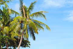 Tropical landscape with palm tree. Exotic island photo background. Royalty Free Stock Photography