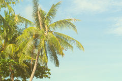 Tropical landscape with palm tree. Exotic island yellow green toned photo. Stock Image