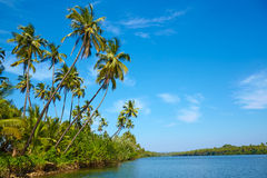 Tropical landscape with palm tree. Royalty Free Stock Images