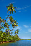 Tropical landscape with palm tree. Royalty Free Stock Photos