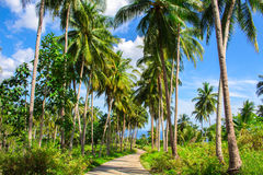 Tropical landscape with palm tree road. Palm road in tropical island. Countryside of Philippines. Beautiful nature on exotic island. Palm tree forest path Stock Images
