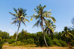 Tropical landscape of a palm tree Stock Images