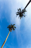 Tropical landscape of a palm tree in Thailand Royalty Free Stock Images