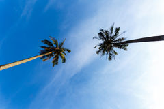 Tropical landscape of a palm tree in Thailand Royalty Free Stock Photography