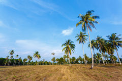 Tropical landscape of a palm tree Royalty Free Stock Photos