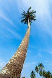 Tropical landscape of a palm tree. In Thailand Royalty Free Stock Photography