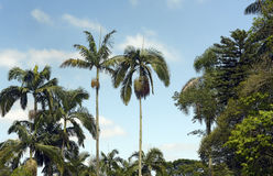 Tropical landscape with palm trees and blue sky Stock Photography