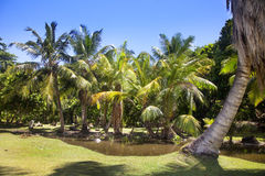 Tropical landscape with palm trees Royalty Free Stock Photos
