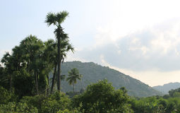 Tropical landscape of palm trees and hills Royalty Free Stock Photography