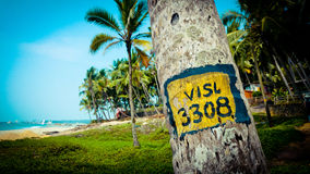 Tropical landscape with palm trees at ocean background Stock Photos