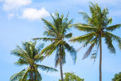 Tropical landscape with palm trees. Palm leaves on sky background. Tropical scene with coco palms. Sunny day in exotic paradise. Summer holiday banner template Royalty Free Stock Photography