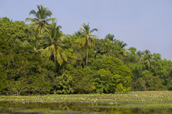Tropical landscape of palm trees and plants near the lake with lilies Stock Images