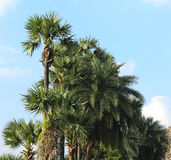 Tropical landscape of palm trees row Royalty Free Stock Photo