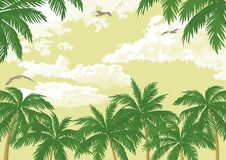 Tropical landscape, palms, seagulls and sky Royalty Free Stock Photography