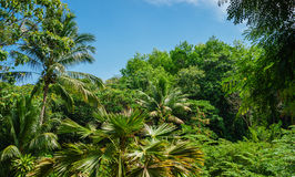 Tropical landscape in Phuket Royalty Free Stock Image