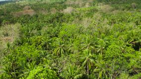 Tropical landscape with rainforest. Camiguin, Philippines. Tropical green forest with palm trees and trees. Lush tropical vegetation. Camiguin, Philippines stock video footage