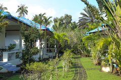 Tropical landscape in the recreation area. In Thailand on Koh Samui stock photo