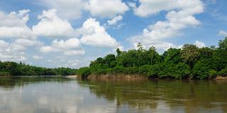 Tropical landscape on the river, Borneo Royalty Free Stock Images