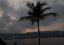 Tropical landscape with the silhouette of a palm tree on a cloudy day, in Acapulco bay. Located in the state of Guerrero, city with beach and tropical climate stock image