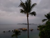 Tropical landscape with the silhouette of a palm tree on a cloudy day. Located in the state of Guerrero, city with beach and tropical climate for vacation royalty free stock images