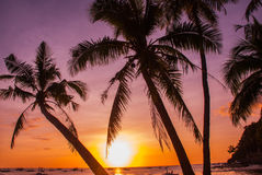 Tropical landscape at sunset. Palm trees on sky background. White beach. Boracay. Philippines. Royalty Free Stock Photography