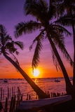 Tropical landscape at sunset. Palm trees on sky background. White beach. Boracay. Philippines. Royalty Free Stock Images