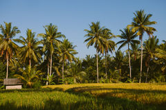 Tropical landscape, Ubud, Bali Royalty Free Stock Image