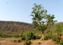 Tropical landscape, vindhya mountain range, India Royalty Free Stock Photography