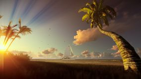 Tropical landscape, yacht sailing and palm trees blowing in the wind at sunrise. Hd video stock footage