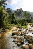 Tropical landscapes Stock Image