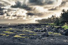 Tropical lava beach and palm trees Royalty Free Stock Photo