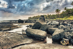 Tropical lava beach and palm trees Stock Images