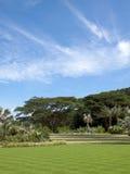 Tropical Lawn Stock Photo