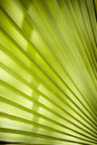 Tropical leaf. Light green Royalty Free Stock Photos