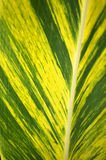 Tropical leaf. The photo of a beautiful tropical leaf Royalty Free Stock Photo