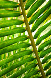 Tropical leaf Stock Photography