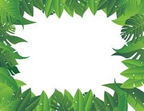 Tropical leaf background Royalty Free Stock Photo