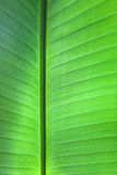 Tropical Leaf Background Royalty Free Stock Image