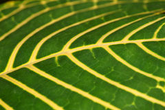Tropical Leaf Background Royalty Free Stock Images