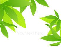 Tropical leaf branch Royalty Free Stock Images
