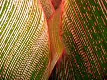 Tropical leaf close-up #1 Royalty Free Stock Images