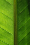 Tropical leaf close up Stock Photo