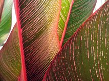 Tropical leaf close-up #3 royalty free stock image