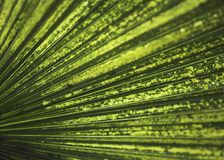Tropical Leaf Closeup. Abstract closeup of a green tropical leaf Royalty Free Stock Images
