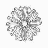 Tropical Leaf. Daisy flower line art illustration Stock Photography