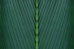 Tropical Leaf, Green Palm Foliage as Natural Abstract Background. Tropical Leaf, Dark Green Palm Foliage as Natural Abstract Background stock images