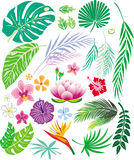 Tropical leaf and flowers royalty free illustration